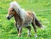 Cool Pony
